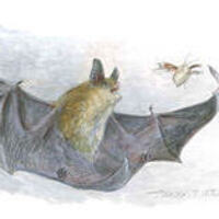 Nocturnal Nature: Bats