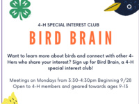 Bird Brain 4-H Club