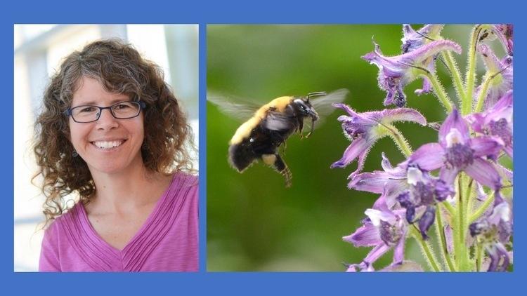 BioSci Seminar - Rebecca Irwin,