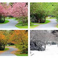 Seasons of the Marsh
