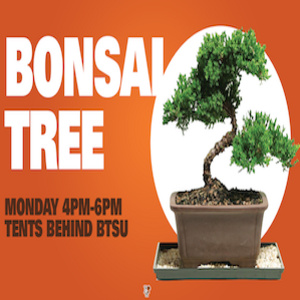 Make and Take Bonsai Trees