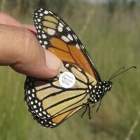 Monarch Watch Butterfly Tagging