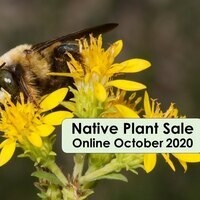 Connect to Protect Native Plant Sale (Online)