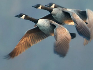 Lights Out to Protect Migratory Birds