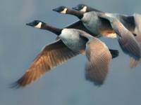 Lights Out to Protect Migratory Birds – Webinar