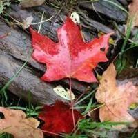 Fall trees walk and talk