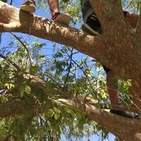 Tree Climbing with OP
