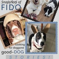 Dog Stories: Snapshots of Fido
