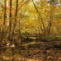 Self-Guided Fall Foliage and Autumn Wonders Walkabout