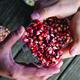Saving Seeds, Sustaining Our Communities