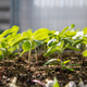 Planting Seeds For Success: Community Connections to Water Your Garden for Wellness!