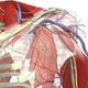 3D image of the left shoulder