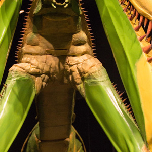 A 60-times life size praying mantis