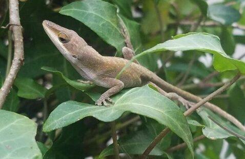 AUsome Amphibians & Reptiles