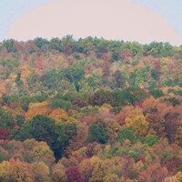 Fall Tree ID Walk Preregistration is required