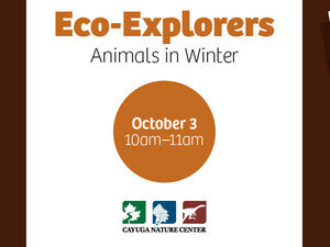 Eco-Explorers: Animals in Winter (Ages 4+)