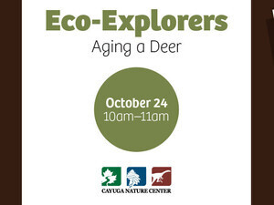 Eco-Explorers: Aging a Deer (Ages 4+)