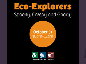 Eco-Explorers: Spooky, Creepy and Gnarly (Ages 4+)