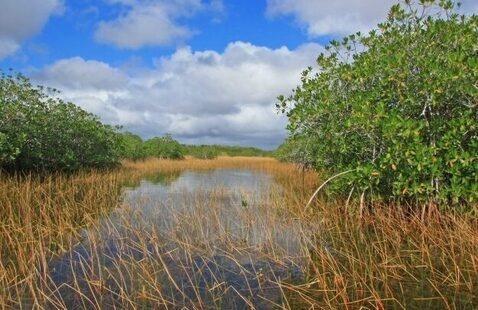 SE CASC Science Seminar: Coastal Mangroves in a Warming Climate