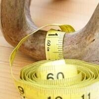 Scoring and Measuring Antlers