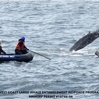 Speaker Series: Whale Entanglements in the Monterey Bay