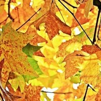 ALL ABOUT FALL- PAINT AND EXPLORE!