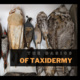 The Basics of Taxidermy