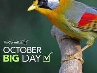 Webinar: What To Do for eBird's October Big Day