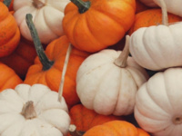 Mini Pumpkin Decorating with GreenSpace