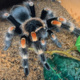 EXCEL Presents: Keeping Tarantulas - Conquering our Fears with a Low-Maintenance Pet