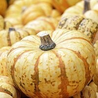 Pumpkin Painting/Fall Canival