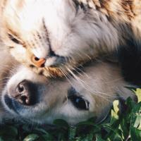 Virtual Pet-a-pet