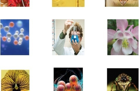 a collage of images. from left to right: red and white molecules on a blue background, a scientist using an eyedropper to put blue liquid in a beaker, a pink flower, a yellow flower, red molecules, and a bug