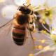 2020 Colorado Pollinator Summit is going virtual!