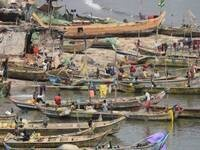 Institute for African Development Special Topic Seminar Series:   Tracking Sources of Neurotoxic Mercury Contaminating Tropical African Fisheries