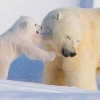 Mystery Science: Why Are Polar Bears White?