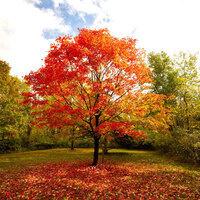 Roemer Arboretum