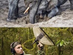 Webinar: Exploring Nature Through Sound and Music