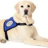 Virtual Therapy Dogs