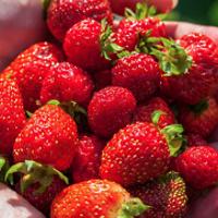Health Bites: Raised Bed Gardening
