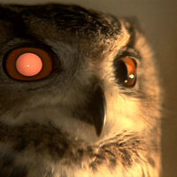 Family Owl Prowl