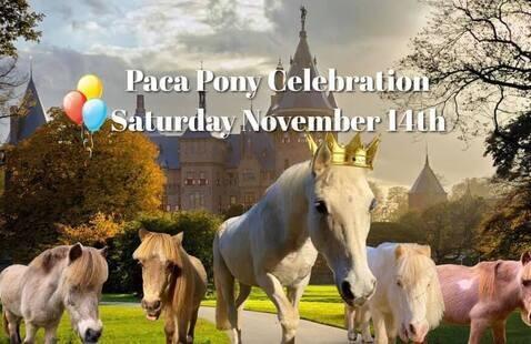 Paca Pony Celebration