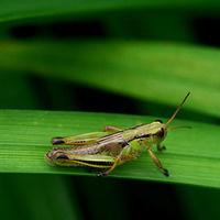 Regional Crop Pest Management School-December 8 or 10