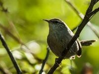 Birding Walk-About, Demuth Park