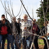 Getting Started with Fruit Trees