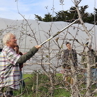 Pruning Deciduous Fruit Trees