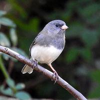 Bird Walk (Beginner Friendly)