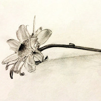*ONLINE* Drawing II for Adults