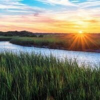 Lunch Break Science: How Plants Can Save Our Salt Marshes
