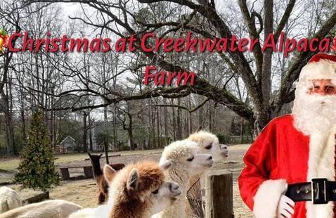 Santa with Alpacas